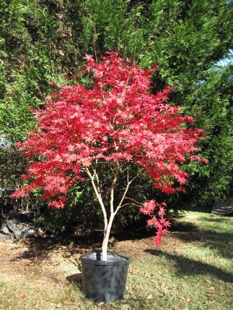 price of trees for landscaping garden design 51233 garden inspiration ideas