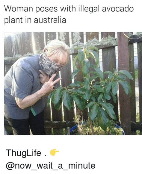 Plant Memes - funny plant memes pictures to pin on pinterest pinsdaddy