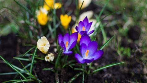 Nākamās nedēļas vidū sāksies astronomiskais pavasaris - DELFI