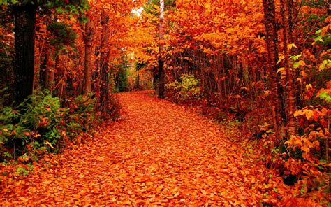 Fall Backgrounds For Desktop by Fall Foliage Wallpapers For Desktop 66 Background Pictures