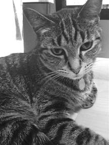 cat grief there is nothing inappropriate about grieving the