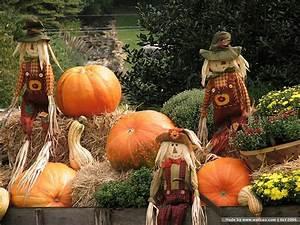 Fall Scarecrow Wallpaper - WallpaperSafari
