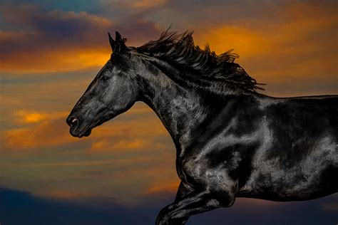 horses wolf shadow photography fine art animal photography