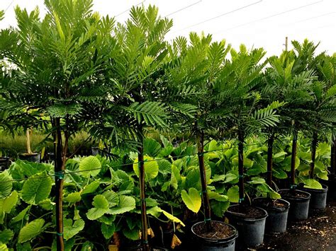 tree nurseries locate find wholesale plants plantant com