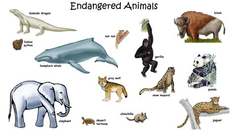 Endangered Animals Wallpapers - picture of endangered animals with names for hd