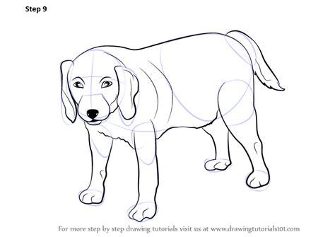 learn   draw  dog farm animals step  step