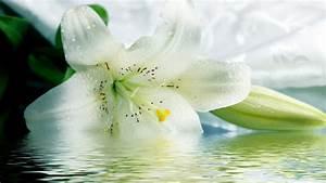 fleur de lys idees de decoration avec cette jolie plante With affiche chambre bébé avec fleur de lys bijoux