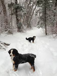 Brady & Rosie: Snowy Hikes With Bernese Puppies