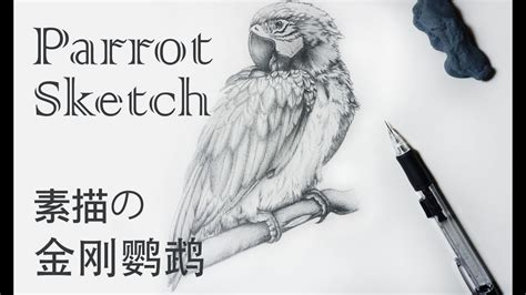 parrot sketch   draw  parrot scarlet macaw