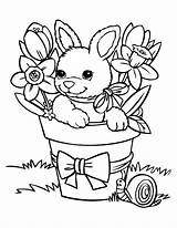 Coloring Rabbit Pages Funny sketch template