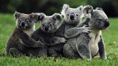 australia australian animals cute animals wild anilams