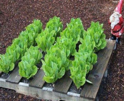 pallet garden ideas enjoy pallet gardening in creative way pallet ideas