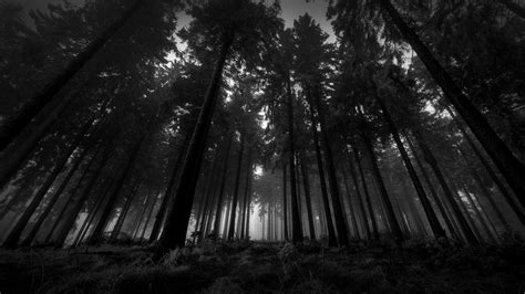 black, Trees, Nature, Landscape, White Wallpapers HD ...