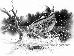 Bass Fish Drawing In Pencil