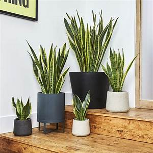 Houseplant, Symbolism, 9, Indoor, Plants, And, Their, Meanings