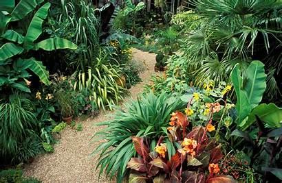 Tropical Flowers Grow Garden Flower Anywhere