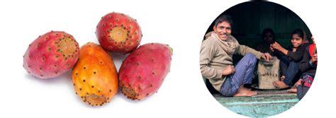 Blog - Post - Opuncija: kaktus koji je promjenio sve što znamo o mršavljenju i spasio tunižane ...