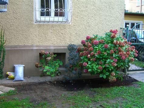 Pflanzen Für Schattigen Standort In Stadtgarten? Fragen