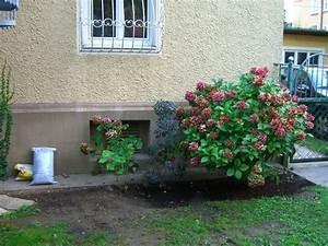 Pflanzen Für Trockene Schattige Standorte : pflanzen f r schattigen standort in stadtgarten fragen ~ Michelbontemps.com Haus und Dekorationen
