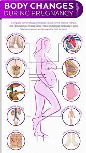 Bodily Changes You Can Expect During Pregnancy