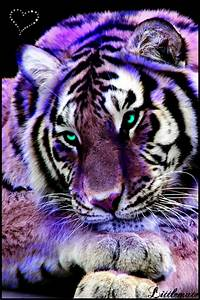 Pin by Debbie Travis on Lavender, Lilac, Purple | Pinterest