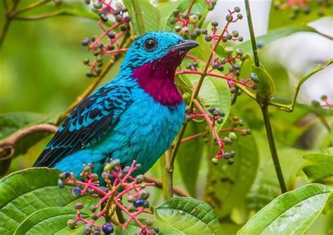 most colorful birds most colorful bird in the world