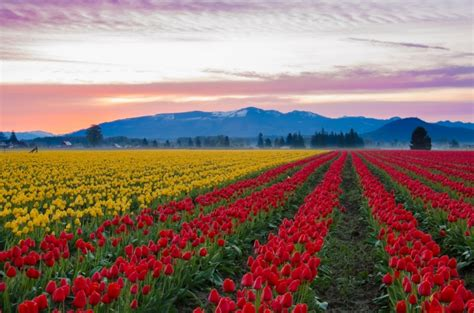 tulip farms in usa 15 breathtaking places you won t believe are in the united states lost waldo