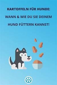 Kartoffeln Für Hunde : kartoffeln sind nicht giftig f r hunde wenn sie richtig zubereitet werden neben protein ~ A.2002-acura-tl-radio.info Haus und Dekorationen