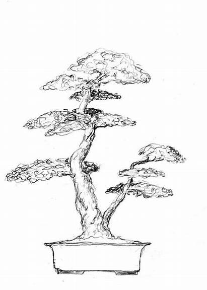 Bonsai Tree Sketch Drawing Trees Tattoo Sketches