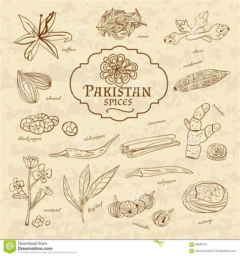cuisines vintage set of spices and herbs cuisines pakistan on stock