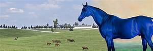Personnel Planners Wallpaper Lexington Ky Horse Capital Of The World