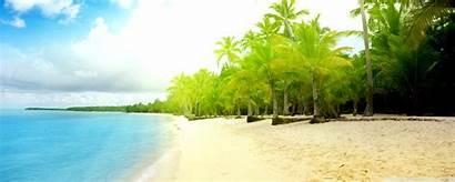 Beach Desktop Wallpapers Trees Palm Latest Backgrounds