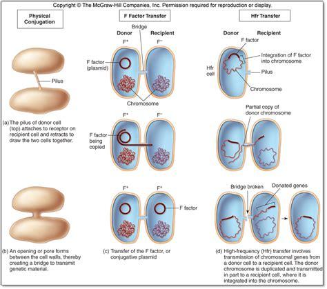 bacterial geneticscmap
