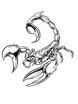 Scorpions Poisonous Arthropods Escorpion Arthropod sketch template