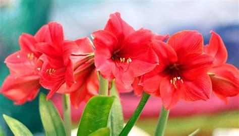 Anleitung Für Eine Wunderschöne Blütenpracht