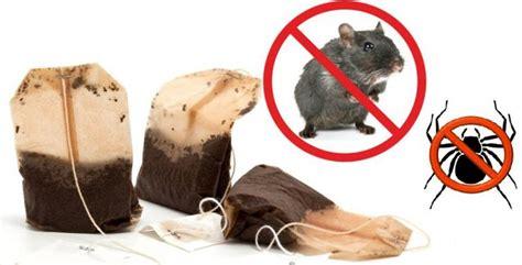 mäuse im haus vertreiben tausendmal besser als gef 228 hrliches rattengift tipps und triks getting rid of mice mice