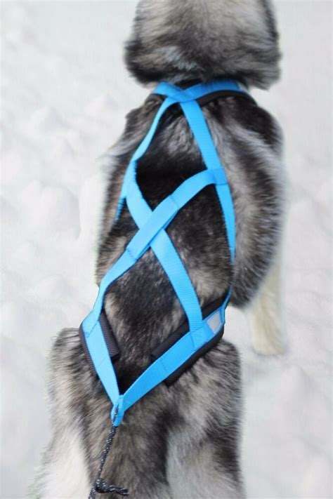 sleigh harness weight pulling harness x back style bike canicross sled in blue ebay