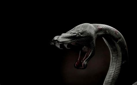 ajian pambungkem sawer ular kamus paranormal