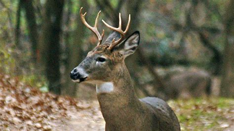 Chronic Wasting Disease Spreads, Could Affect