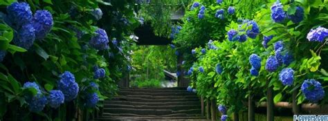 flowers blue japan stairways path facebook cover timeline