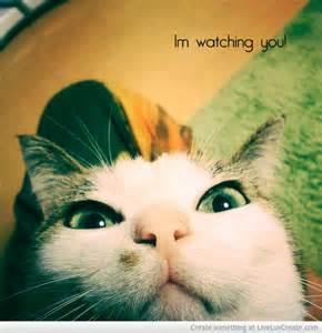 Funny Creepy Cat Meme