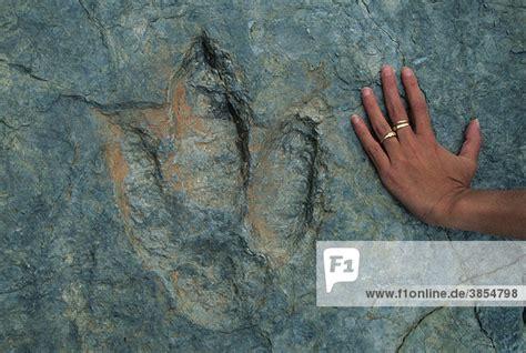 fossilien dinosaurier fussabdruck mit menschlicher hand