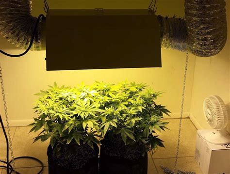 grow room lights which reflector is best for my mh hps grow light grow