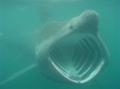 stupefying science sharks
