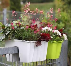 Balkonkasten Halterung Geländer : gel nder balkonkasten crown kaufen bestellen online im pflanzenshop harro 39 s pflanzenwelt ~ Watch28wear.com Haus und Dekorationen