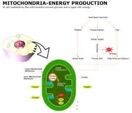 How Do Mitochondria Produce Energy