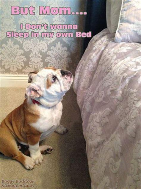 bulldog meme ideas  pinterest funny
