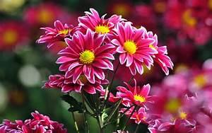 beautiful flowers a1 hd desktop wallpapers 4k hd