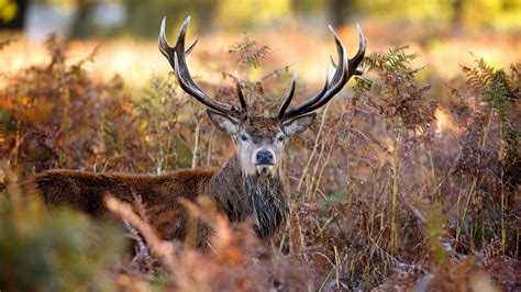 Deer Hunting Desktop Wallpaper 4k Deer Wallpapers High Quality Download Free