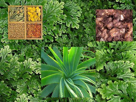 pengertian tanaman obat pengertian tanaman obat jenis